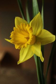 My baby Walters favorite flower was the daffodil. How special this flower is to me now, & ironic it is the flower for my birth month.