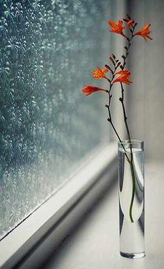 Vase on Window Sill with Orange Flowers Deco Floral, Arte Floral, I Love Rain, Window Sill, Nature Wallpaper, Rainy Day Wallpaper, Ikebana, Rainy Days, Belle Photo