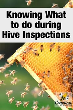 The less time spent inside the beehive - the better. But you have to know what to look for during hive inspections. That begins with having a good guideline of the needs of each hive and good hive records. How To Start Beekeeping, Beekeeping For Beginners, Hives And Honey, Honey Bees, Bee Facts, Bee Hive Plans, Bee Swarm, Raising Bees, Bee Boxes