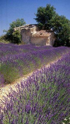 Lavendel! #LavenderFields