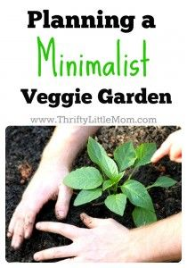 Minimalist Veggie Garden. Ideas for keeping your garden simple, practical and reduce waste.