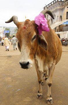Ribbon in Pushkar, India by viwehei, via Flickr