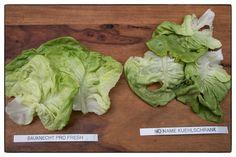 Nach einer Woche im Gemüsefach. Kopfsalat-Test