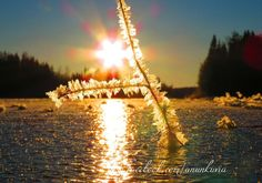 frozen Nature Photography, My Photos, Frozen, Nature Pictures, Wildlife Photography
