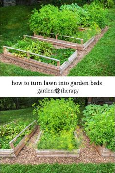 garden therapy Converting Lawn into a Vegetable Garden with Raised Beds http://gardentherapy.ca/raised-vegetable-garden/ via bHome https://bhome.us