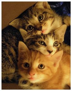Cats And Kittens For Sale London neither How To Draw Cute Animals Pictures next Pictures Of Cute Animals Coloring Pages. Mother Cat And Kittens Pictures along with Cute Animals Cartoon Pics Animals And Pets, Baby Animals, Funny Animals, Cute Animals, Funny Cats, Animals Kissing, Animals Planet, Small Animals, Wild Animals