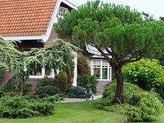 Eine gute Mischung aus Bäumen und Sträuchern kann den Garten das ganze Jahr über schmücken