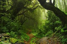 """Wall Mural """"forest, jungle, forest - selva nepal"""" ✓ Easy Installation ✓ 365 Day Money Back Guarantee ✓ Browse other patterns from this collection! Photo Wallpaper, Wall Wallpaper, Animal Magazines, Forest Flowers, Wall Murals, Wall Art, Amazon Rainforest, Canvas Pictures, Photography Backdrops"""