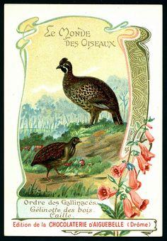 French Tradecard - Hazel Grouse & Quail by cigcardpix, via Flickr