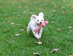 Ein Welpe Zieht Ein Welpen Neues Zuhause Hunde Welpen