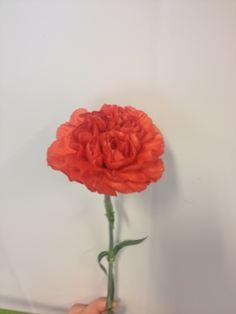 Dianthus - ... - Nellik - rød/orange