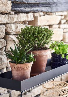 House Plants Decor, Plant Decor, Plant Box, Summer Bucket Lists, Planter Pots, Liv, Toscana, Inspiration, Check