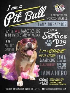 I am a Pit Bull: served in WW1, service dog, canine good citizen, hero, narcotics dog, agility champion, therapy dog