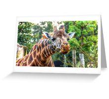 Giraffe Reaching for a Bite to Eat Greeting Card