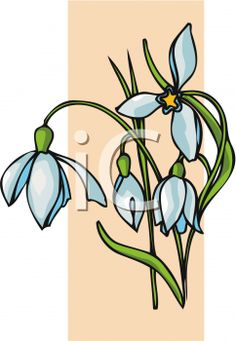 iCLIPART - Clipart Image of Snowdrops in Spring
