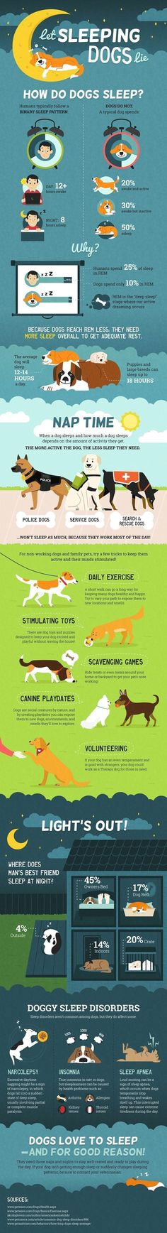 Dog Obedience Training - CLICK THE IMAGE for Various Dog Care and Training Ideas. #dog #dogtraining