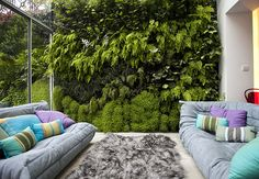 Daniel Bell was asked to create an interior living wall for a house in north London