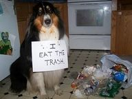 How to embarrass a bad dog..