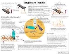 Tangles are Trouble infographic all about preventing and removing mats.  Available in a variety of poster sizes suitable for framing, laminating, or photocopying at http://society6.com/Groomerisms/Tangles-are-Trouble-Infographic-about-Grooming-Matted-Pets_Print#1=45 .. see more pet groomer comics and educational material at Groomerisms.com