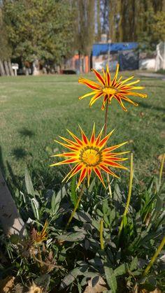 Flores del Jardín. Predio Unter Roca