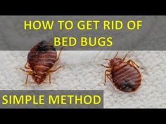 1000 images about for the home on pinterest roaches roach killer and bed bugs. Black Bedroom Furniture Sets. Home Design Ideas