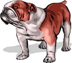 5527268262 40 Best Dog Collars   Tags images
