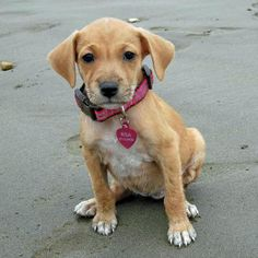 Risa the Mixed Breed Pictures 1033402