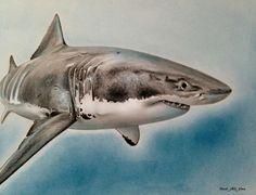 Shark by noseblide on DeviantArt - drawing