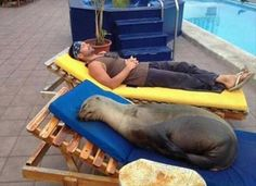 Beach Chair Gets the Seal of Approval - Dump A Day Random Pictures Of The Day - 51 Pics