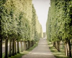 TITLE: Versailles Gardens LOCATION: Versailles, France SIZE: Various (see variation options) Border: 1/4 white border around print for easy matting  One of the most famous palaces in the world, Versailles has some incredible gardens to share as well. This beautiful shot is of perfectly sculpted trees lining the perfectly straight paths through the garden maze.  Other Finishing Options: - Want it on canvas? Check out my canvas listing http://etsy.me/2bIMbUf - Want it framed? Add professional…