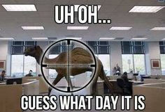 How many feel about the annoying Geico camel.  Not me, of course…..