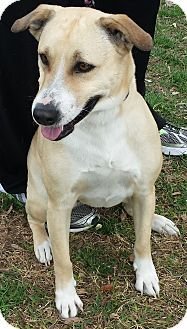 ADOPTED - Bella - located at Loving Arms Pet Placement in Houston, Texas - 3 year old Collie/Labrador Retriever Mix - I love walks, going to the park and will fetch toys.