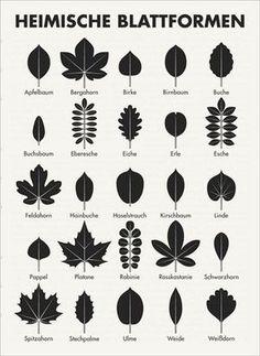 Native leaf shapes determine trees by Iris Luckhaus- Heimische Blattformen Bäume bestimmen by Iris Luckhaus -