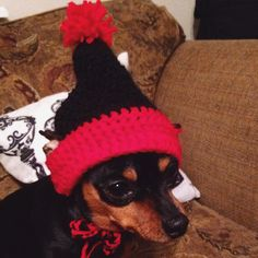 It snowed today. Goliath was not impressed. He wants spring time and sunshine. #Goliath #houseofsolange #doghat #handmade #crafty #crochet #crochethat #doggiehat#dogtoque #handcrafted #myfurbaby #minpin #yarn #yarnfun #madeathome #crochetdoghat #etsyfun #etsy #etsyshop #etsyfind #etsyseller by house_of_solange #lacyandpaws