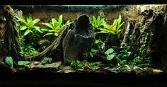Dart Frog Vivarium | Flickr - Photo Sharing!