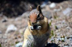 ecureuil aux usa par cyrille