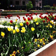 Tulip Time on Michigan Avenue, Chicago