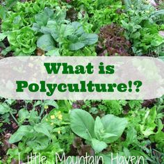 what is polyculture.jpg