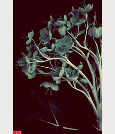 My Garden Today: Pinterest miniblog Pictures of my own garden