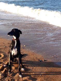 Frank-My Dog