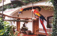 Birds at Chichicastenango  by Lyndsey McClendon on 500px
