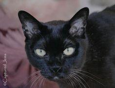 Captured Jems Photography -Pet Portraits