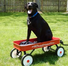 Start of a new week and time to fix someone's little red wagon...