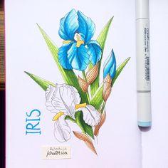 Just #iris.