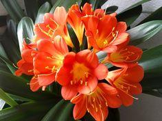 Máte byt sokny orientovanými na sever a západ a rádi byste jejich parapety okrášlili pokojovými květinami? Nebojte se, existují rostliny a květiny, které vám budou vděčné právě za tuto polohu. …