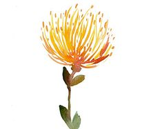 ohia lehua flower - Google Search