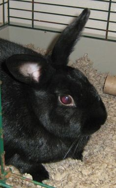COURTESY POSTINGPUDDLES is currently located at Country Pet Specialties, http://countrypetnj.com/ . Please visit Lily at the store, or contact Alice or James at 908-236-8292 for more information.Puddles is a rabbit that loves to run around.  She has...
