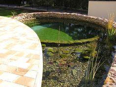Epic zahradn jez rko biotop koupac jez rko Zahradn jez rka Kamenosocha stv pl chal