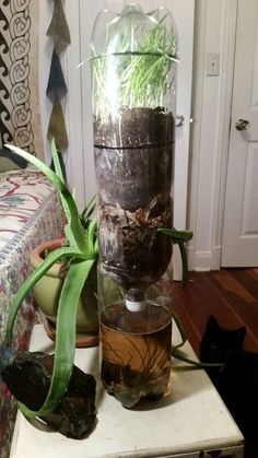 Make a self-sustaining ecosystem on a small scale, using plastic soda bottles.