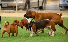 Let's Talk: Dog Park Etiquette - Top Dog Tips